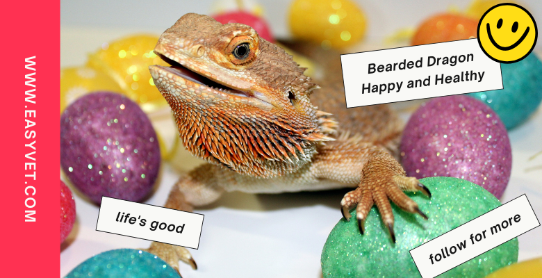 bearded-dragon-happy-and-healthy